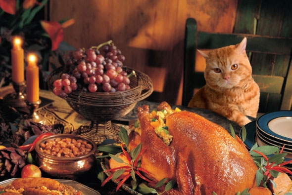 Thanksgiving treats are they safe for your pet work for What do you eat on thanksgiving list